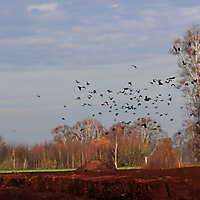 Moorabbaugebiet