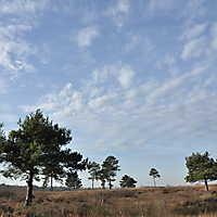 Venner Moor Nov. 2014-051
