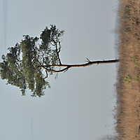Venner Moor Nov. 2014-054