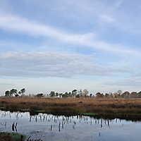 Venner Moor Nov. 2014-068