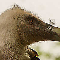150531 • Tierpark Nordhorn