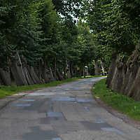 Barenaue