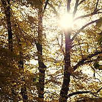151025 • Herbststimmung • Bürgerpark Osnabrück