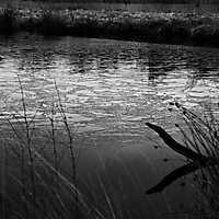 160124 • Vennermoor