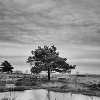 Annette-Venner Moor 01
