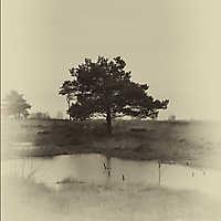 Annette-Venner Moor bearbeitet 01
