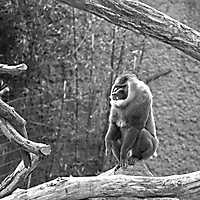 160320 • Tierportrait • Osnabrücker Zoo