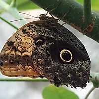 190223 • Schmetterlinge • Emsflower